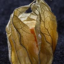 Shahen-texture